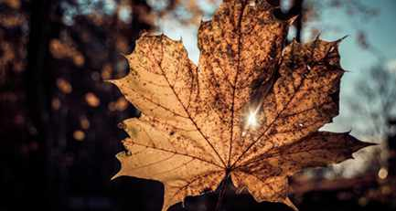 Herbstzeit = Igelzeit
