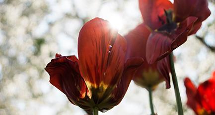 Frühlingsfarbenrausch