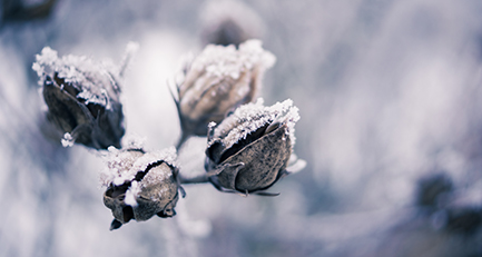 Wintereindrücke